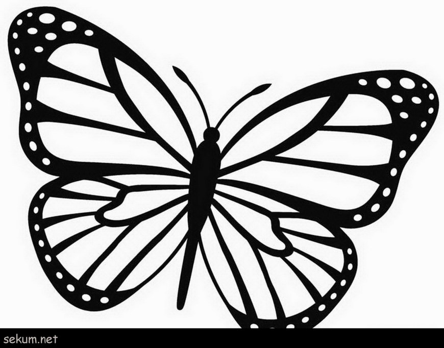 Monarch Butterfly Coloring Page Epic Monarch Butterfly Coloring Page With Additional Coloring