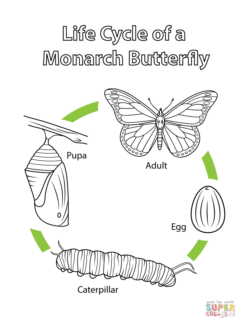 Monarch Butterfly Coloring Page Life Cycle Of A Monarch Butterfly Coloring Page Free Printable