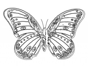 Monarch Butterfly Coloring Page Monarch Butterfly Coloring Page With Free Printable Pages For Kids