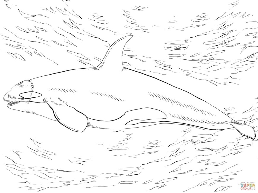 Orca Coloring Pages Killer Whale Orca Coloring Page Free Printable Coloring Pages