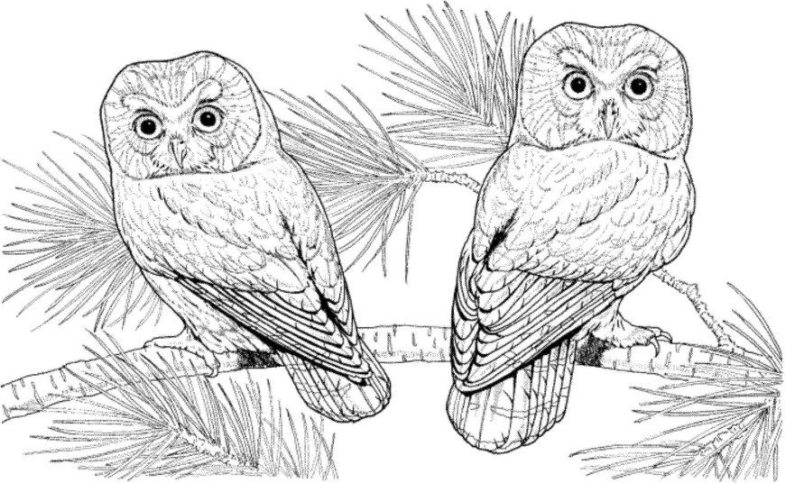 Owl Coloring Pages For Adults Adult Coloring Pages Owls Elegant Gallery Printable Owl Coloring