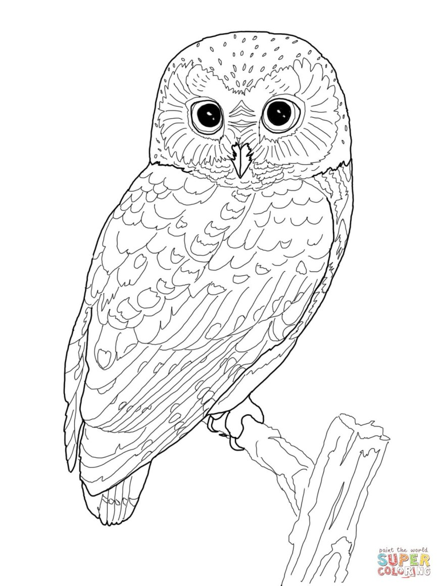Owl Coloring Pages For Adults Printable Owl Coloring Pages For Adults At Getdrawings Free