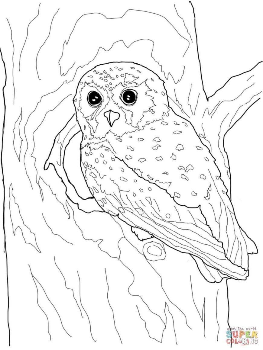 Owls Coloring Pages Coloring Page Owl Coloring Pages Page Owls Free 54 Owl Coloring Pages