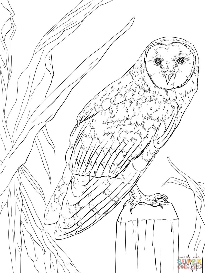 Owls Coloring Pages Owls Coloring Pages Free To Print For Adults Printable Owl Unicorn