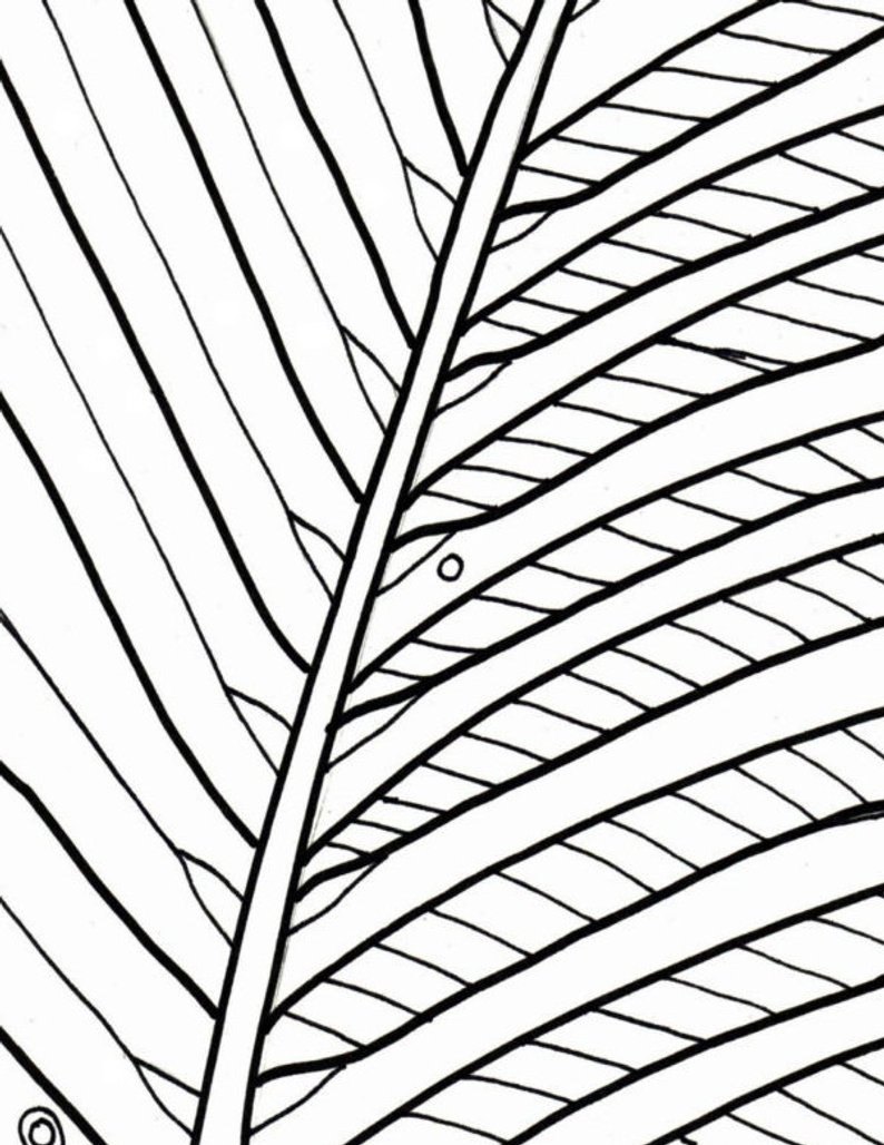 Palm Tree Coloring Page Palm Tree Coloring Page Beach Art Digital Download Adult Etsy