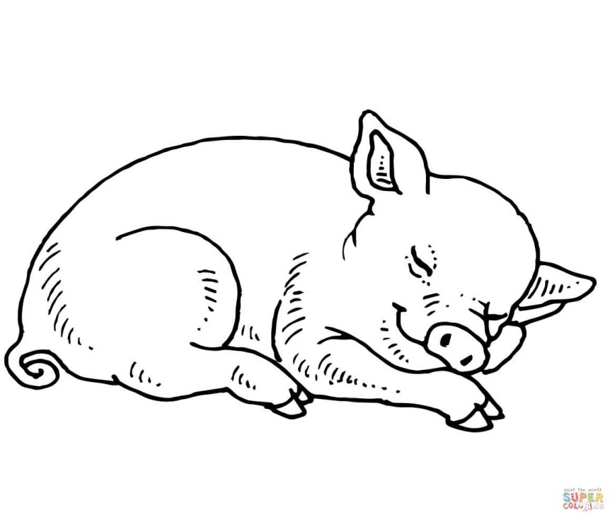 Pig Coloring Page Pig Coloring Pages Free Coloring Pages