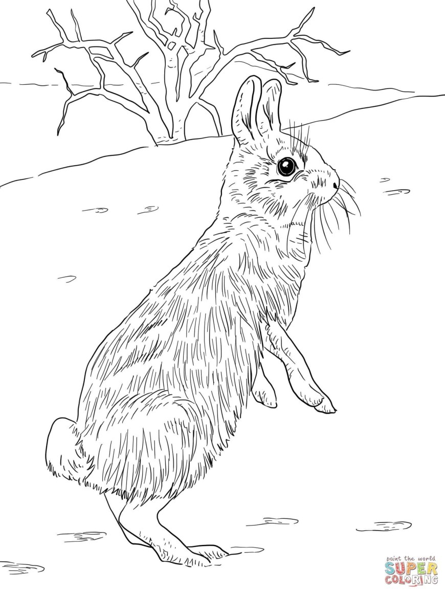 Rabbit Coloring Pages Jack Rabbit Coloring Page Fresh Awesome Kangaroo Rat Coloring Pages
