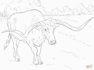 Texas Coloring Pages Realistic Texas Longhorn Coloring Page For Texas Longhorns Coloring
