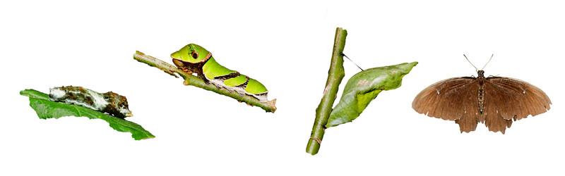 Growing a Butterfly Heart in a Caterpillar World