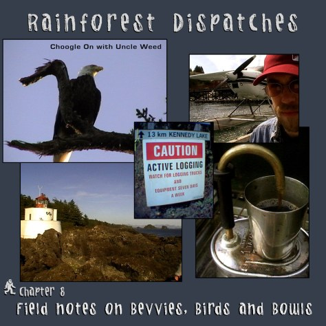 Field Notes on Bevvies, Birds and Bowls – Rainforest Dispatches, chapter 8/9