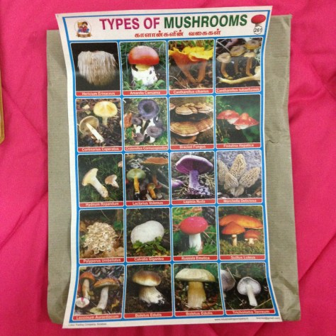 Types of Mushrooms: India, Items Assembled