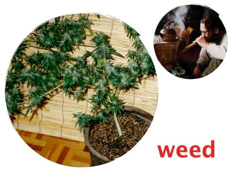 Inspire Japan Stories 9: Weed