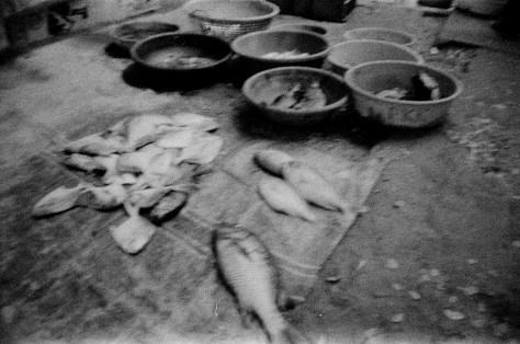Fish for sale near Mahatma Gandhi beach, Fort Kochi