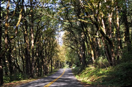 Scenic Highway 1