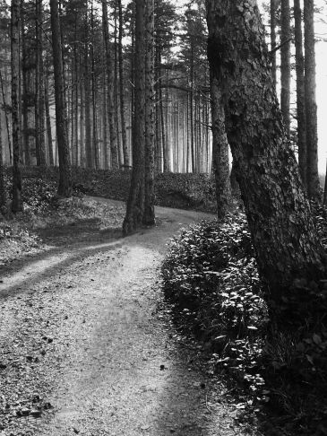 Cape Lookout Trail - B/W
