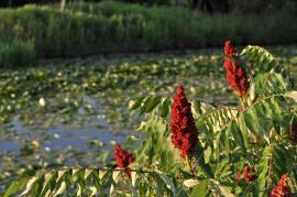 Wetlands - Lansing