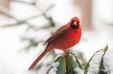 Snow Birds-023