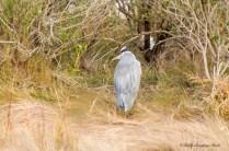Edwin B Forsythe Wildlife Refuge-3