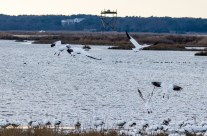 E. B. Forsythe Wildlife Refuge – New Year's Eve
