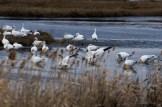 E. B. Forsythe Wildlife Refuge-15