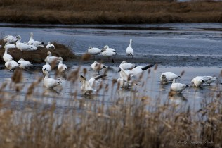 E. B. Forsythe Wildlife Refuge-15