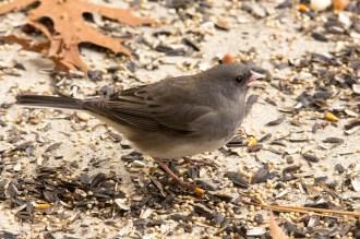 Jan 06 2015 Snowbirds-005