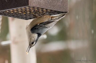 Jan 06 2015 Snowbirds-008