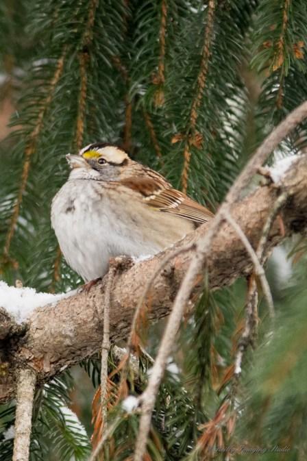Jan 06 2015 Snowbirds-014
