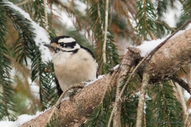 Jan 06 2015 Snowbirds-018