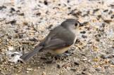 Jan 06 2015 Snowbirds-020