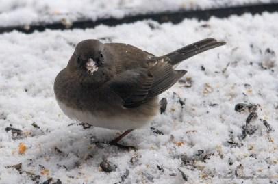 Jan 06 2015 Snowbirds-021