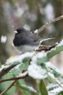 Jan 21 2015 Snowbirds-008