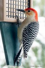 March 5 2015 Snowbirds-008