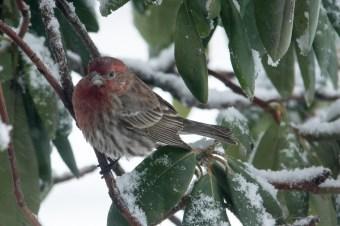 March 5 2015 Snowbirds-010