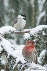 March 5 2015 Snowbirds-011