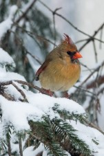 March 5 2015 Snowbirds-016