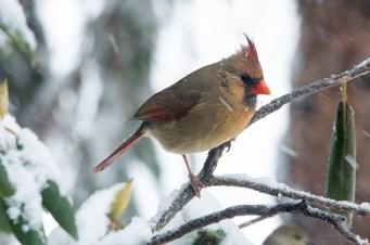 March 5 2015 Snowbirds-019
