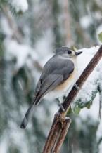 March 5 2015 Snowbirds-022