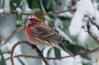 March 5 2015 Snowbirds-024