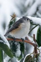 March 5 2015 Snowbirds-025