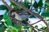 07 22 2015 Birds-002