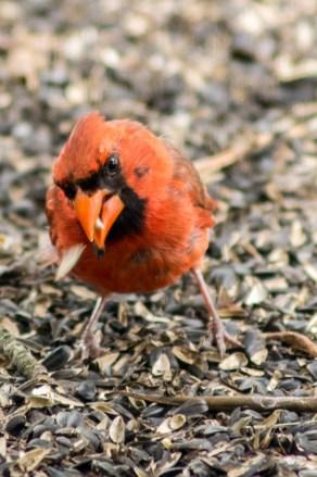 07 30 2015 Birds-003