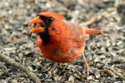 07 30 2015 Birds-004