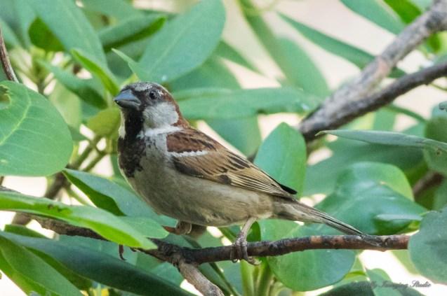 July 20 2015 Birds-04