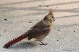 June 23 2015 Birds-01
