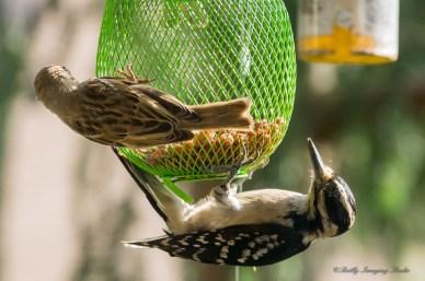 June 23 2015 Birds-05