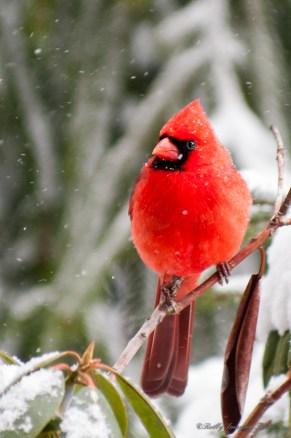Best Birds-09