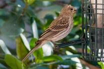 Best Birds-104