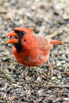 Best Birds-114