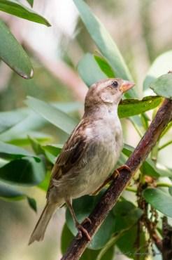 Best Birds-116